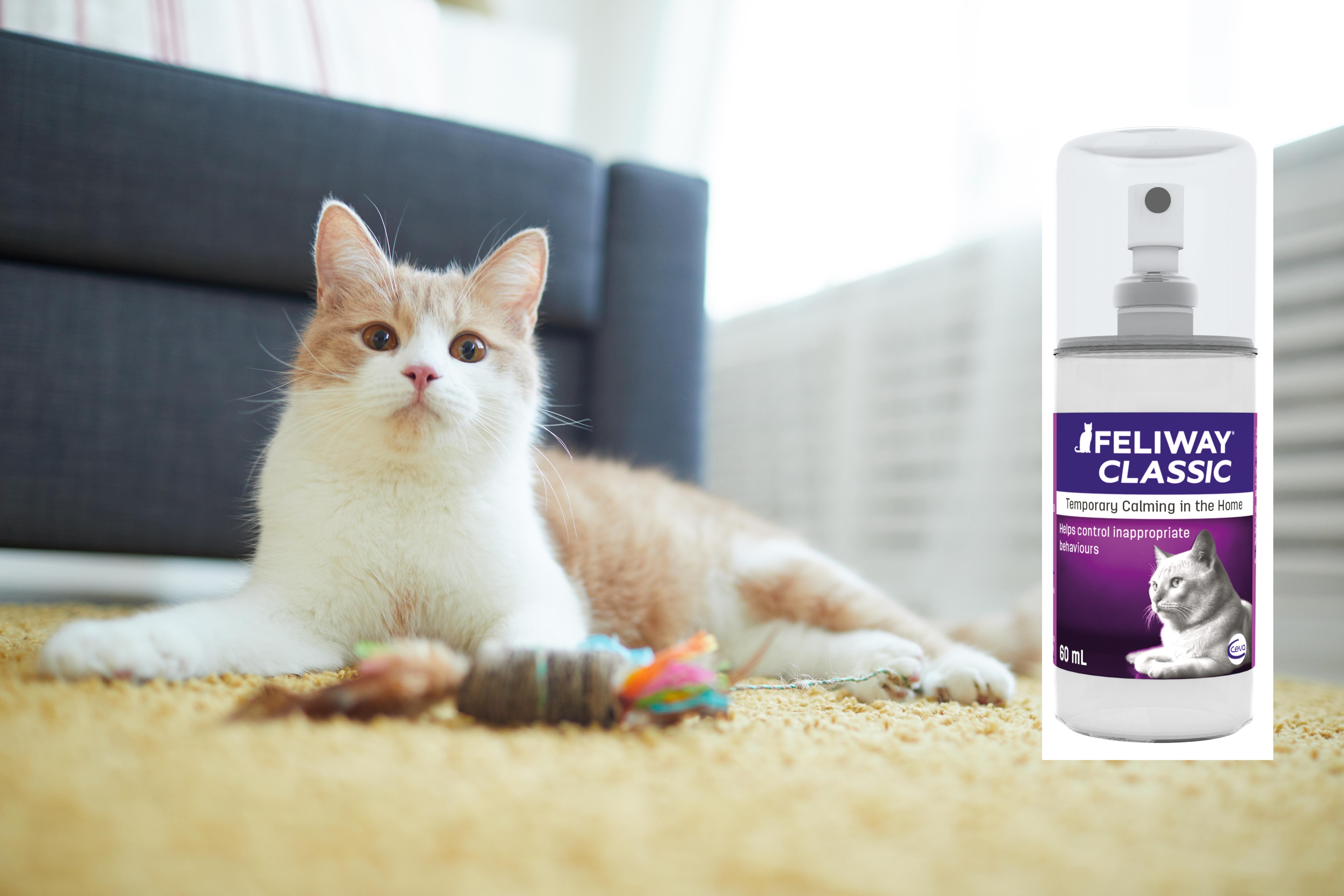 Mai mult confort și siguranță pentru feline cu feromonii sintetici