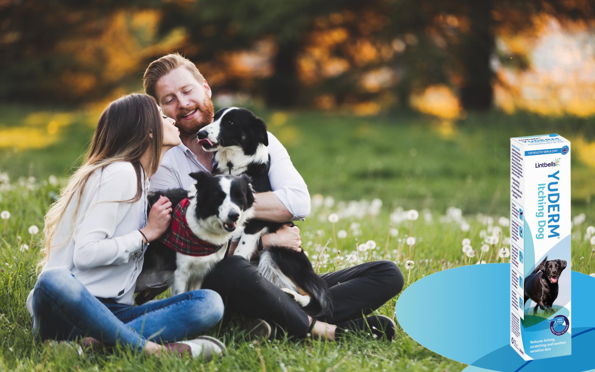 Noul produs YuDERM Itching Dog ajută la îmbunătățirea funcționalității barierei cutanate