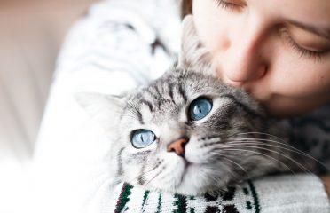 """Deseori și comportamentul felinei ar putea să-ți indice o problemă. Dacă aceasta își atinge mai des decât de obicei ochii cu lăbuțele, încercând să-i """"spele"""", atunci cel mai probabil simte un disconfort."""