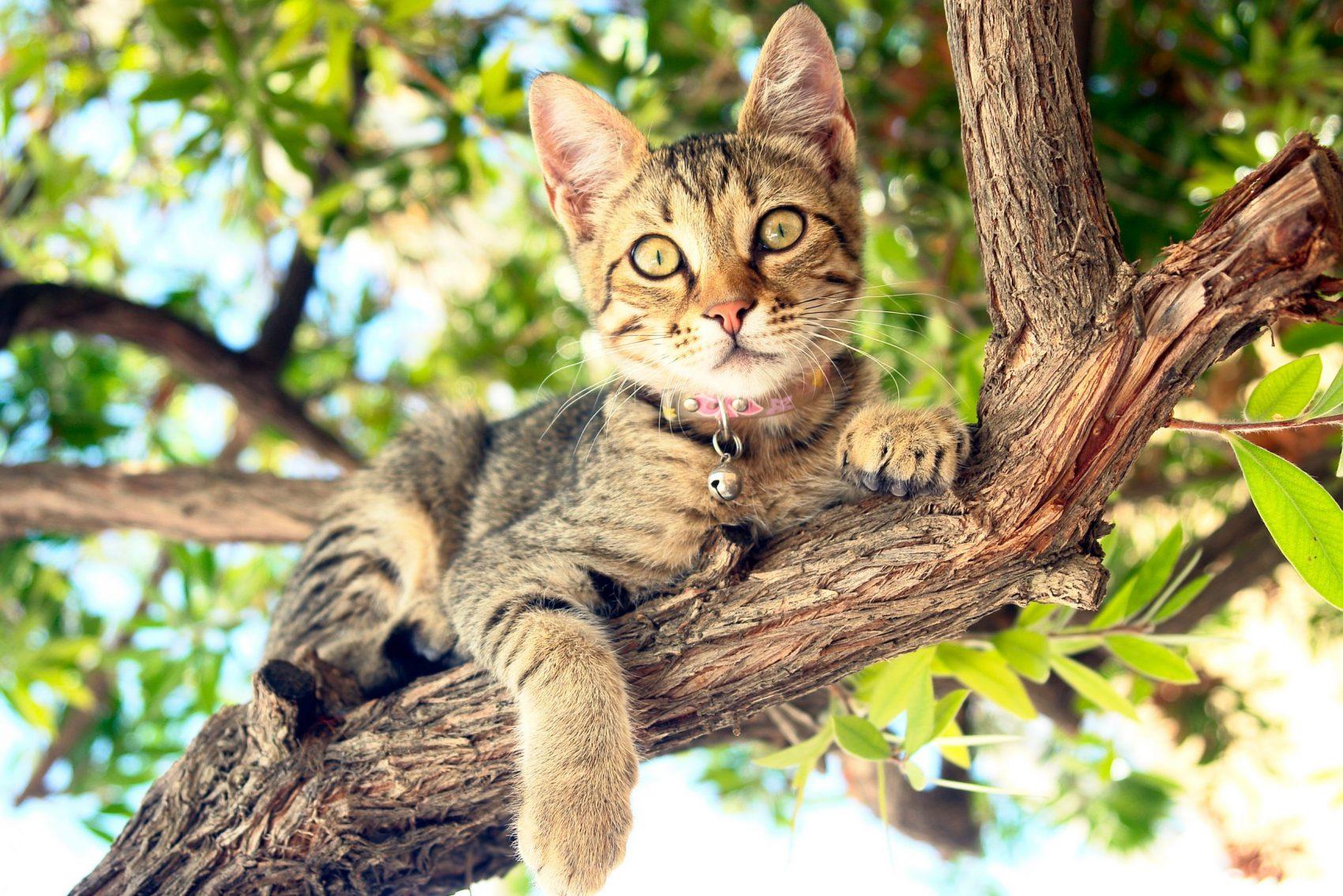Preferă să toarcă liniștită și să-și facă siesta tolănită pe canapea, însă o ieșire la joacă, în aer liber, ar fi ca o adevărată aventură pentru felina ta, mai ales vara.