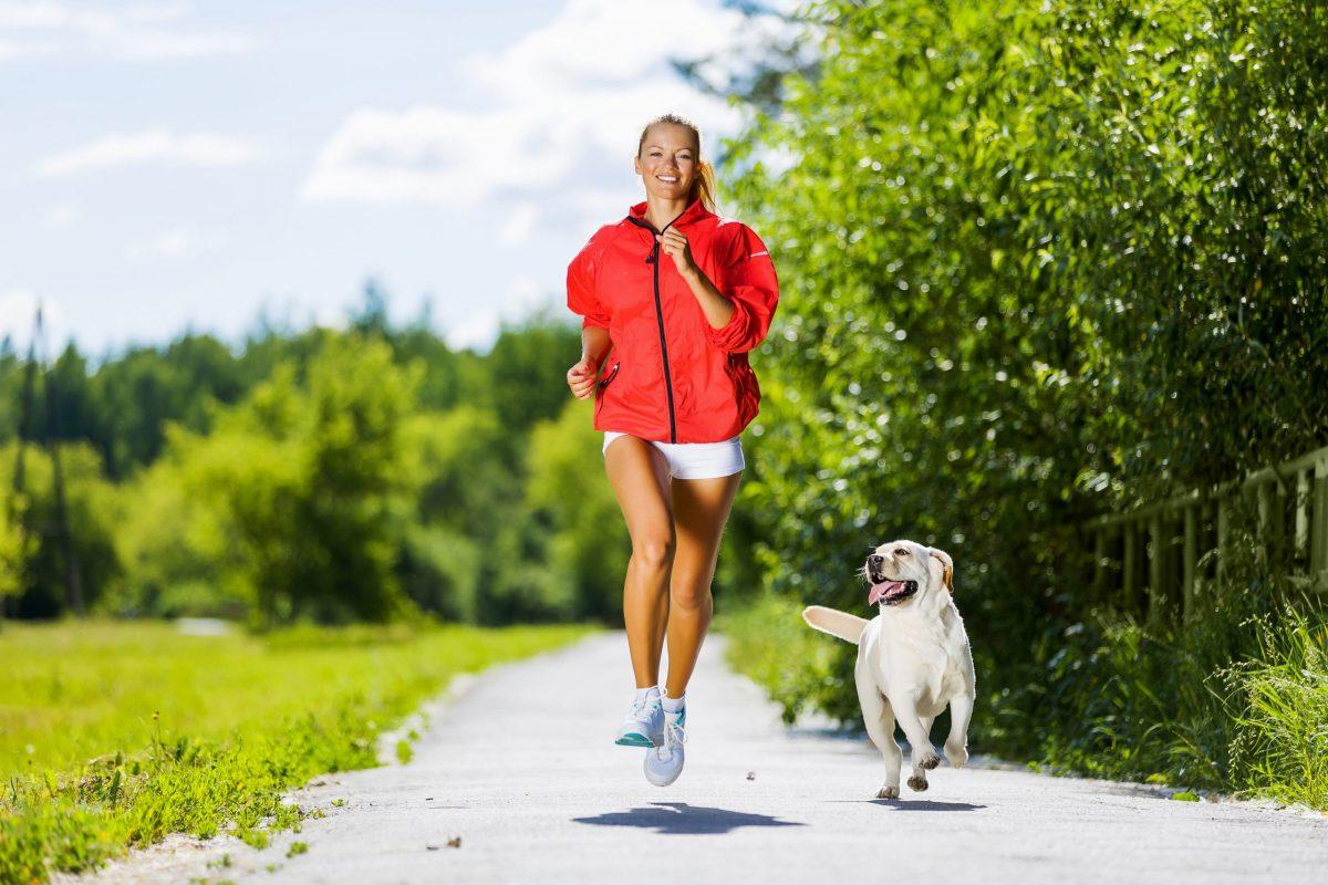 2. Câinii cu blană lungă trebuie tunși în sezonul cald, pentru a evita astfel disconfortul sau șocul termic, în special în cazul puilor.