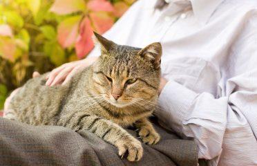 De cele mai multe ori, depistarea timpurie a acestora cu ajutorul medicului veterinar face diferența între suferință și tihna unei vieți liniștite a felinei senioare.
