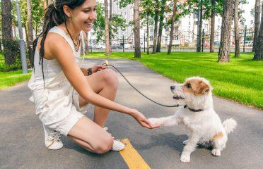 Indicat este să petreceți mai mult timp cu patrupedul într-un parc sau într-o zonă unde se poate juca în voie pe iarbă, la umbra copacilor.