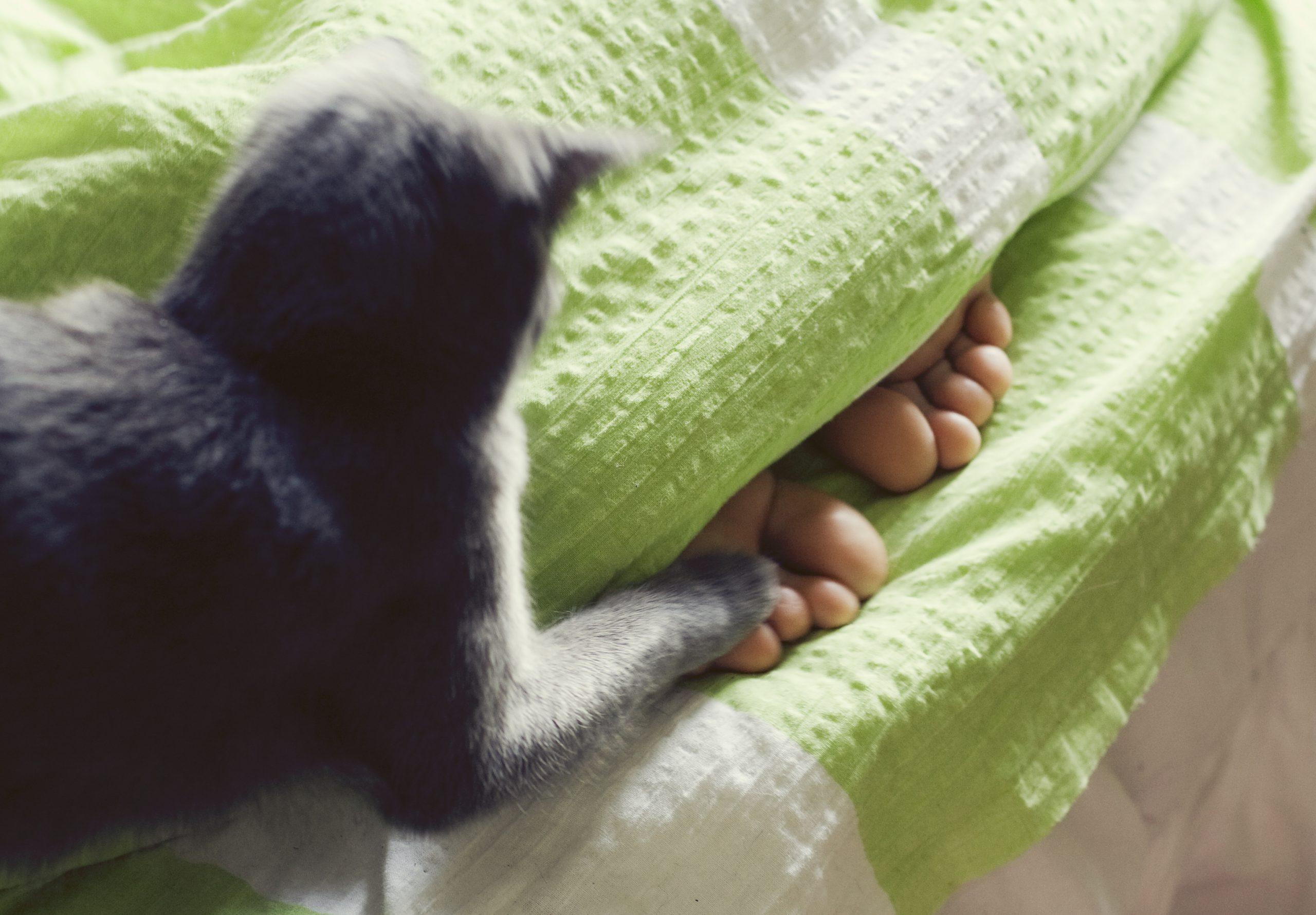 Este important ca felina ta să aibă la dispoziție mai multe jucării cu care să se poată distra.