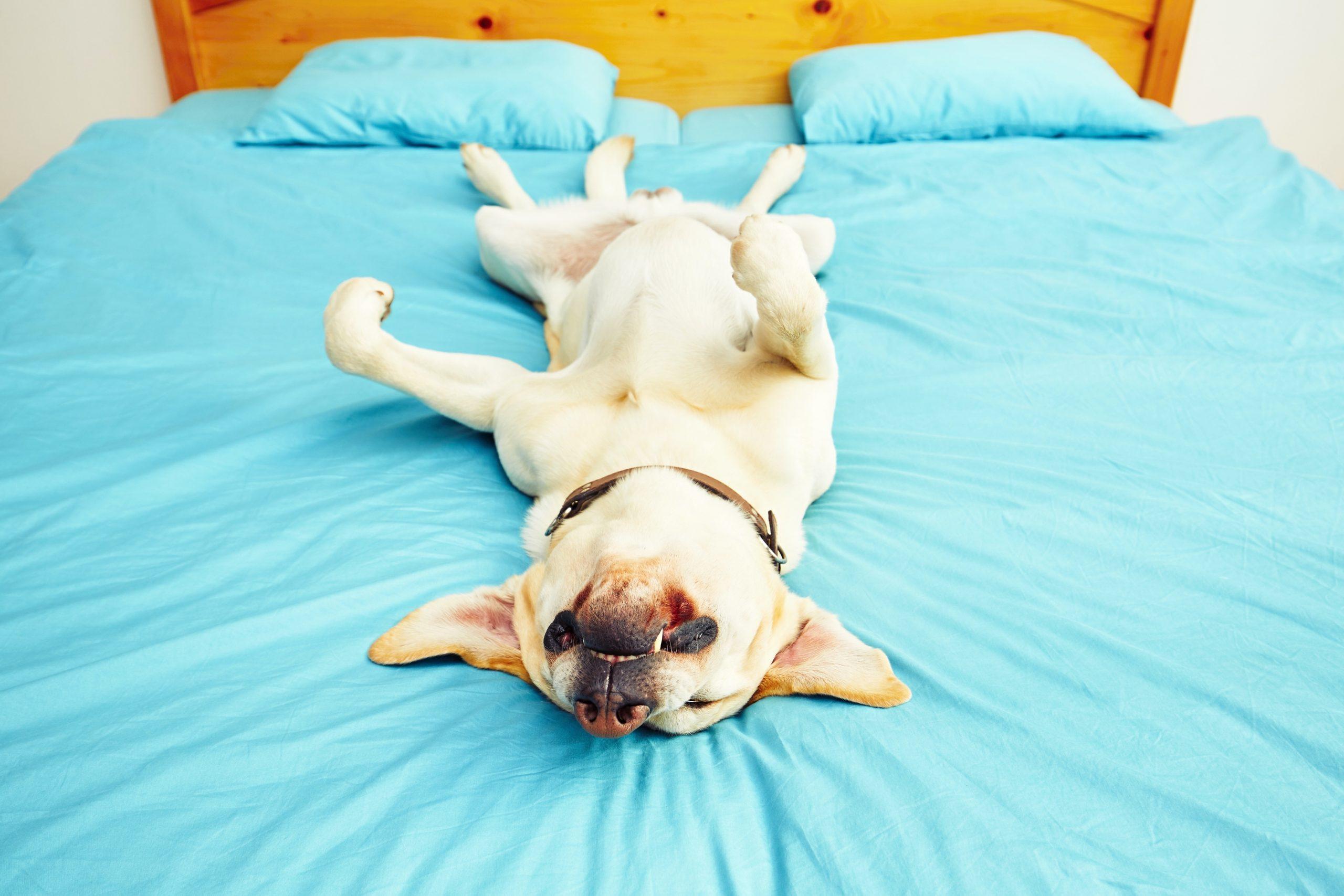 Ce ne spune poziția de somn a cățeilor noștri despre personalitatea lor